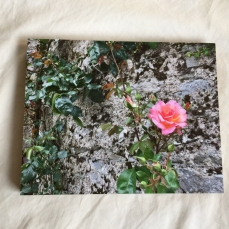Rose - Photo Mounted